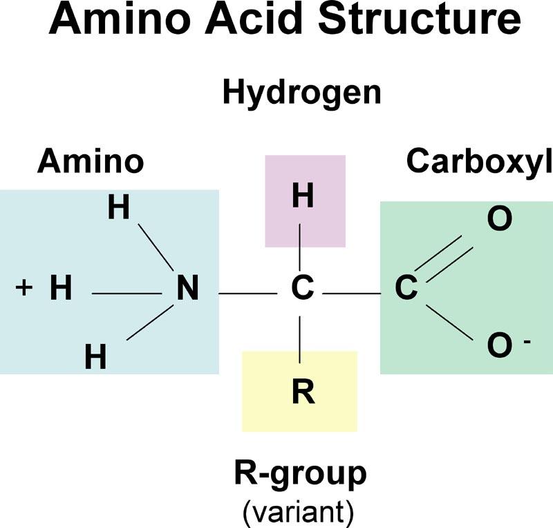 amino-acid-structure