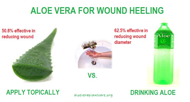 Aloe-Vera-Uses