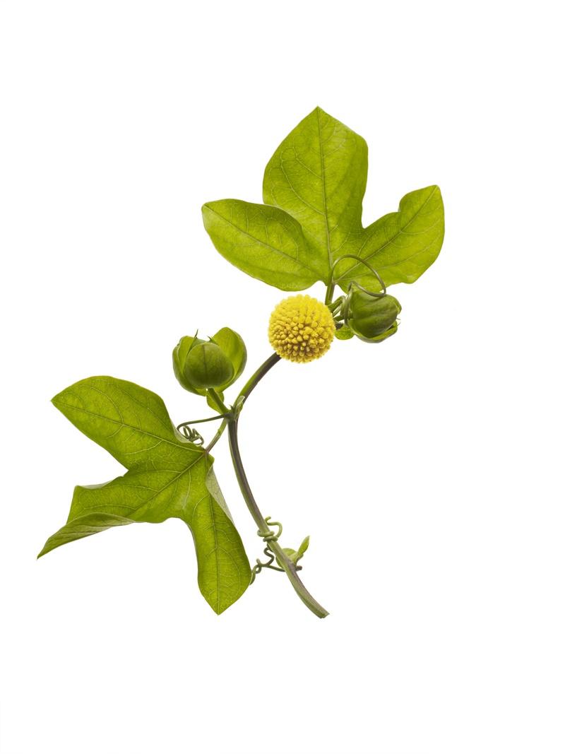 Plant Powerful Lifting Cream
