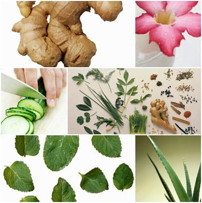 พืชสมุนไพรไทย