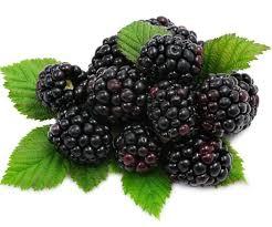 blackbeery health benefits