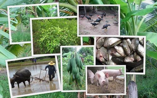 เกษตร น่ารู้ thaigoodview.com