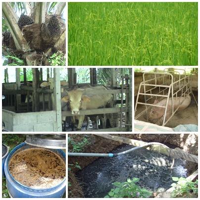เรื่องเกษตร น่ารู้ thaigoodview.com