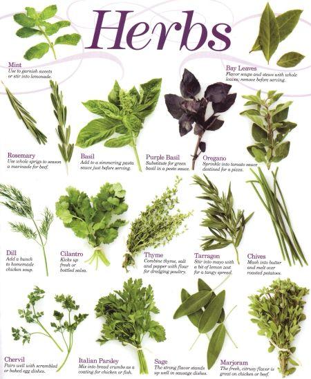 Herbs พืชสมุนไพร