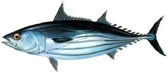 ปลาทูน่า