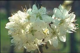 พืชสมุนไพร ดอก