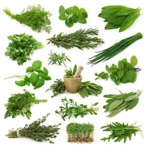 Thai Herb Benefits
