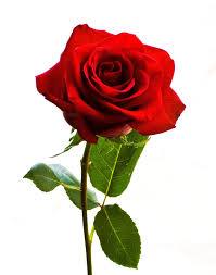Valentine's Day 8