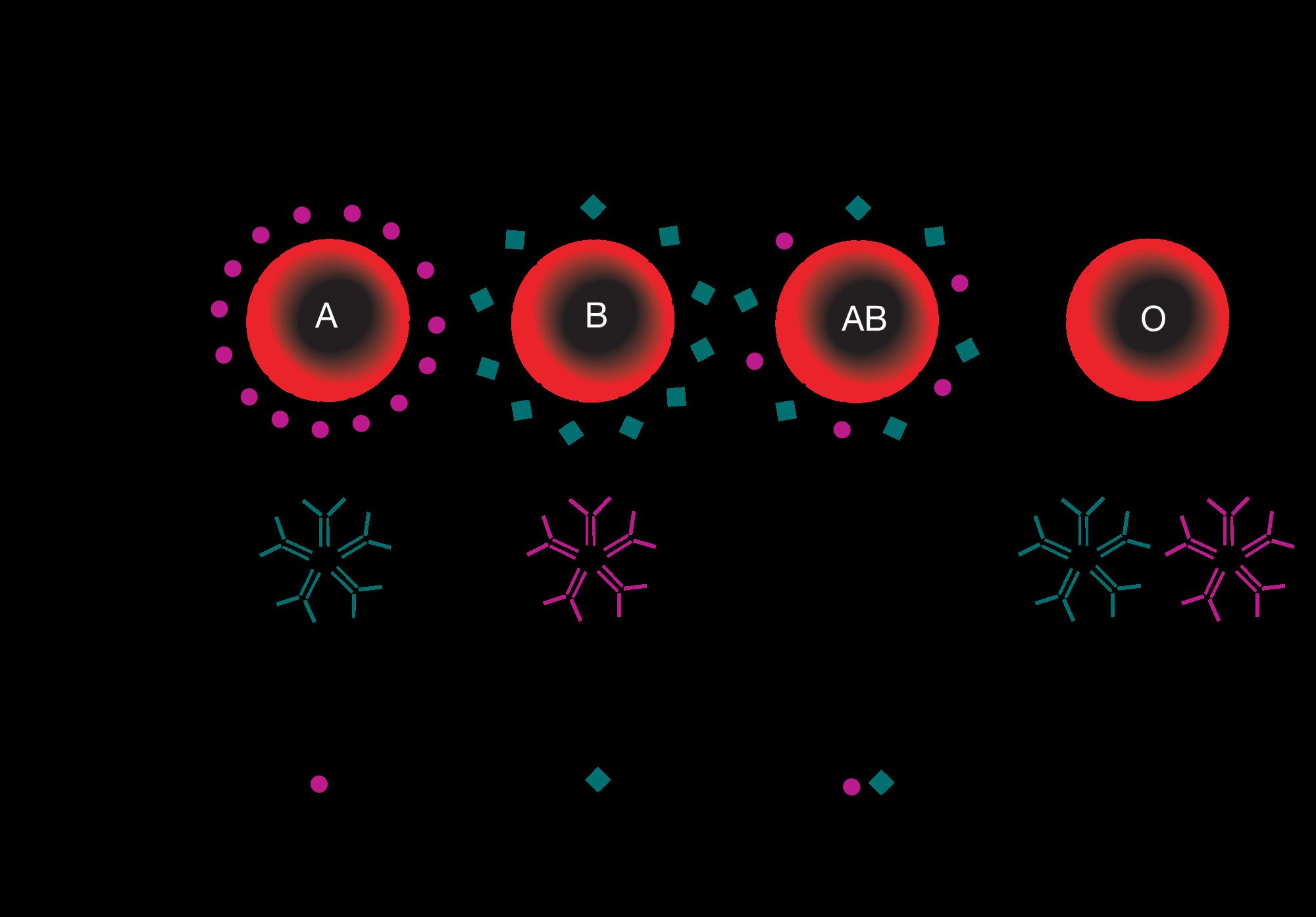 blood_type_th antibody