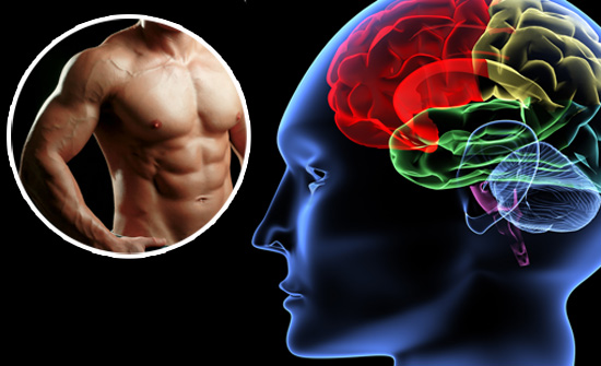 brain function and muscle build