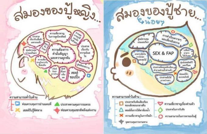 men and women brain
