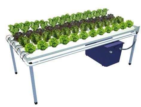 ชุดปลูกผักไฮโดรฯ