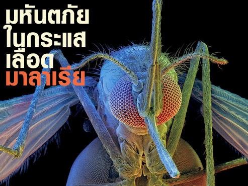 ไวอากร้า ป้องกันมาลาเรีย1