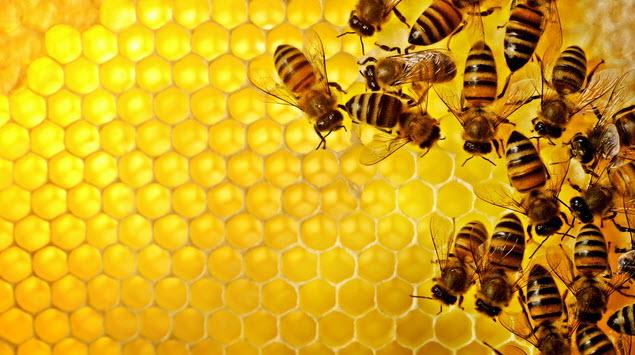 น้ำผึ้งรักษาสิว2