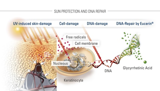 EUCERIN-OR-Sun-face-products-behind-the-science-04_infographic
