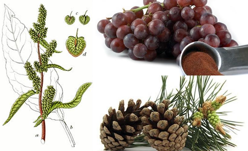 natural extracts สารสกัดธรรมชาติทำให้ผิวขาว-ครีมหน้าขาว