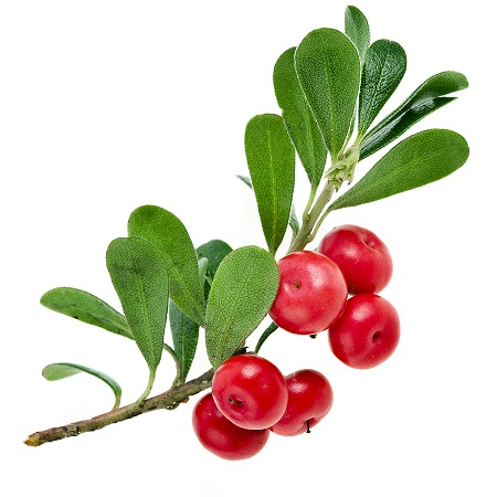 bearberry-alpha-arbutin
